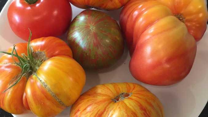 tomato garden; Beauty King, Lover's Lunch