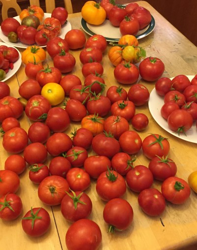 Paul's tomato tips