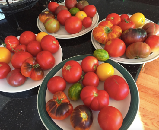 unusual tomatoes