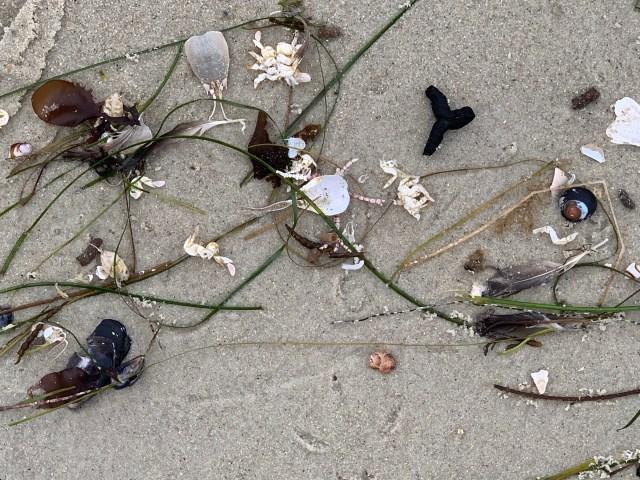 Asilomar beachcombing