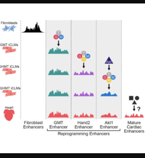weekend reads include this paper from Eric Olson's lab
