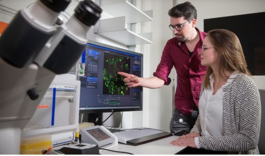 Eyleen de Poel and Maarten Geurts studying some organoids used in the CRISPR cystic fibrosis research. Image from UMC Utrecht.