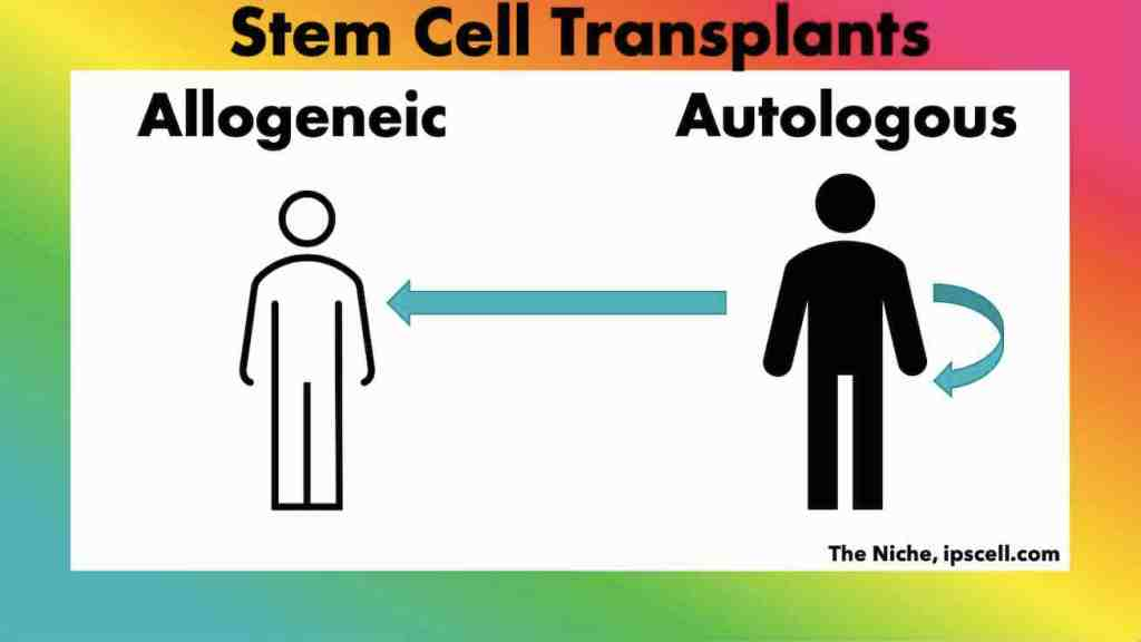 autologous vs allogeneic