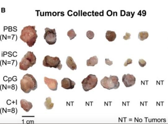 stem cell vaccine paper ouyang et al