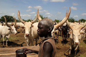 A member of the Mundari tribe stands amongst cattle in Terekeka, South Sudan. / Credit:Jared Ferrie/IPS