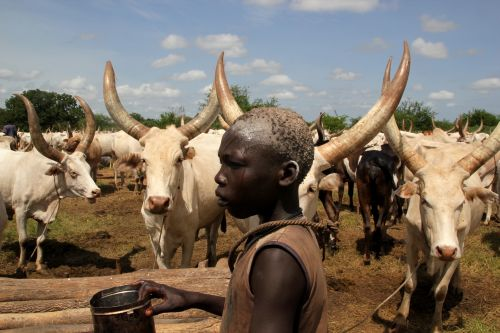A member of the Mundari tribe stands amongst cattle in Terekeka, South Sudan. / Credit:Jared Ferrie/IPS