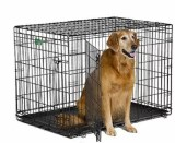 Best Dog Crate for Large Breed Dogs