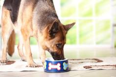 German Shepherd Diet & Nutrition