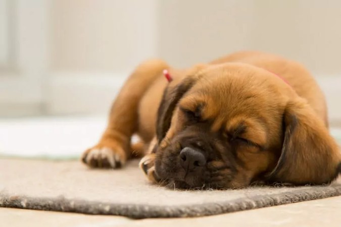 Tips for Potty Training a Puppy
