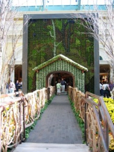 bellagio conservatory6