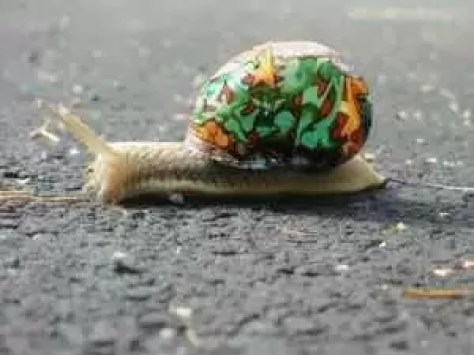 painted-snail-shell-12