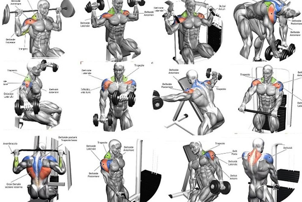 Названия упражнений бодибилдинга в картинках