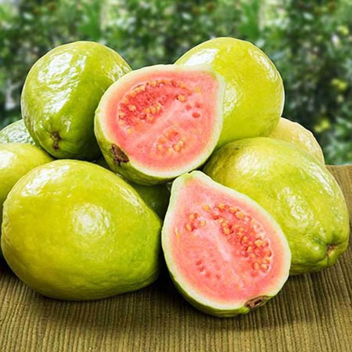 Fruits_22