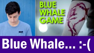 Blue Whale Myths Busted!