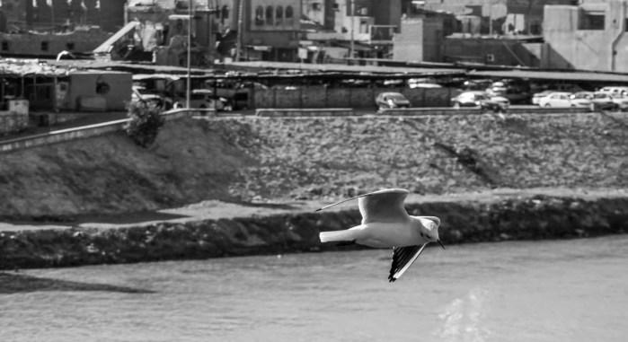 احتفالية المصور العراقي – من جسر الشهداء