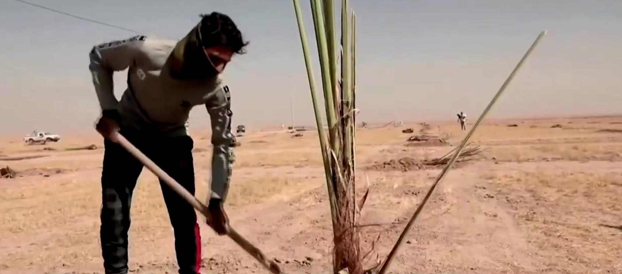 مشروع لزراعة 80000 نخلة في البصرة (فيديو)