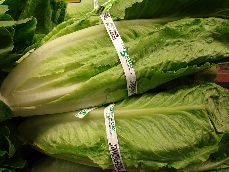 E.coli outbreak linked to romaine lettuce