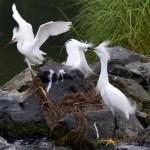Birds 1.