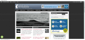Advertise on Ireland's Wildlife