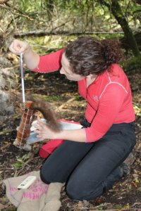 Weighing a red squirrel