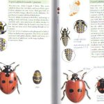Insects of Ireland -- inside the book