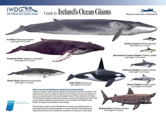 Identifying whales and dolphins