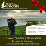 wildlife-gift-voucher Christmas