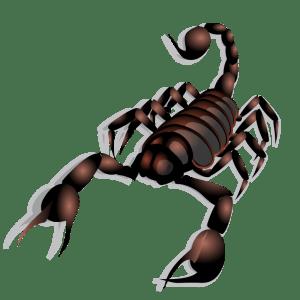 Anonymous_Scorpion