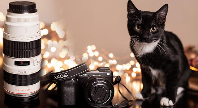 Cameras & Lenses for Sale!