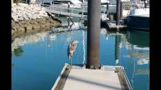 Heron have definitely figured out that marinas equal good fishing because they have been in every marina I've been in so far.