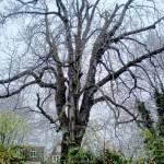 Ein Baum auf Reisen?