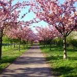 Und dann: Frühling