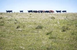 Rural scene in Southern Uruguay. Francesco Fiondella