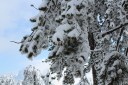 В горах Кипра зима самая обыкновенная - снежная и холодная