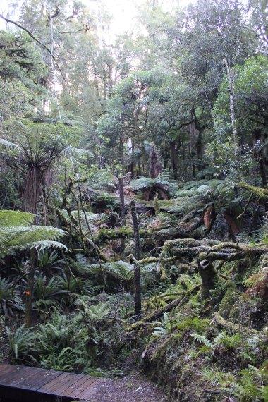 Lake Waikaremoana (144)_1