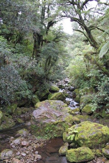 Lake Waikaremoana (339)_1