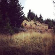 Wald Lichtung