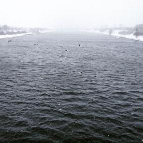 Neue Donau Schnee Möwen