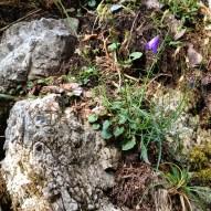 Fels Waldblümchen