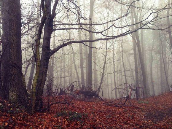 Fahrzeug Wald
