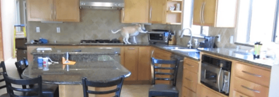 What my beagle does when are not home. Beagle gets into hot oven . YouTube
