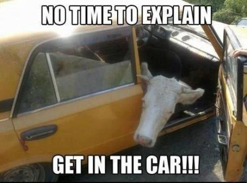 Get In The Car Irish Memes