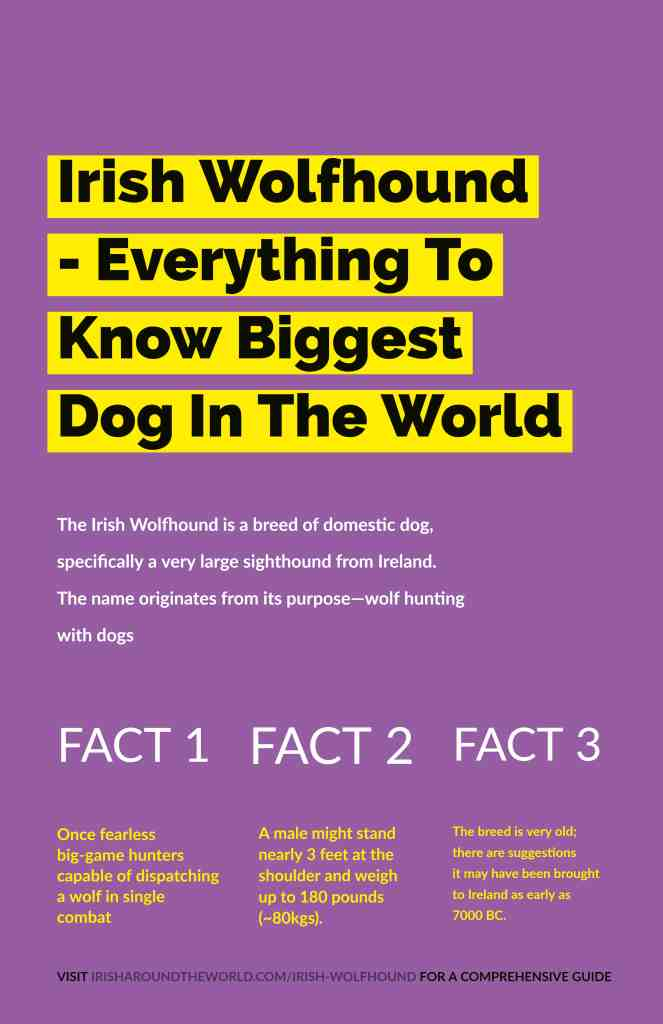 Facts about the Irish Wolfhound. The biggest dog in the world.