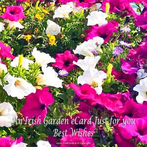 an-Irish-Garden-eCard-Just-for-you
