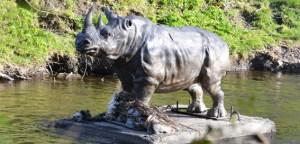 Dodder Rhino. Secret Dublin.