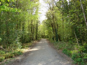 Belleek Woods, which is on the Ballina side of the greenway route