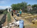 Thriving Garlic and Working Camp Kids
