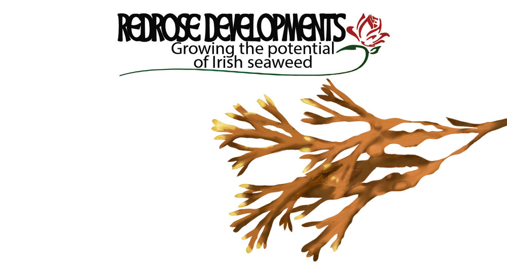 Links to Redrose development