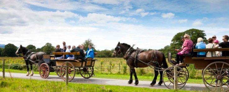 Jaunting Cars Killarney, County Kerry