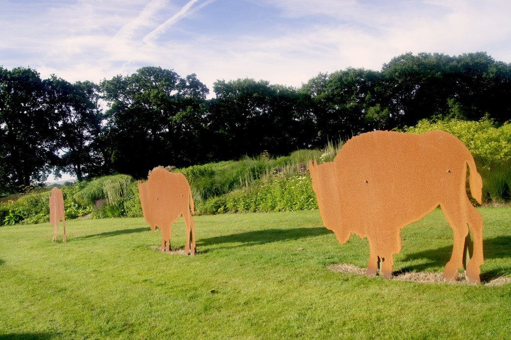 The buffalos